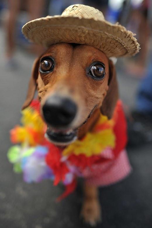 Animal carnival in Rio de Janeiro